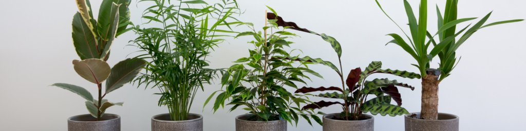 Group of green plants including Chamaedorea