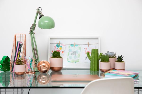 Hoya Kerrii in an office