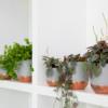 trailing houseplants on white shelves
