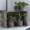 Plants in grey pots inside crate with more plants in pots on top
