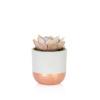 Lilacina succulent in grey and copper dipped ceramic pot