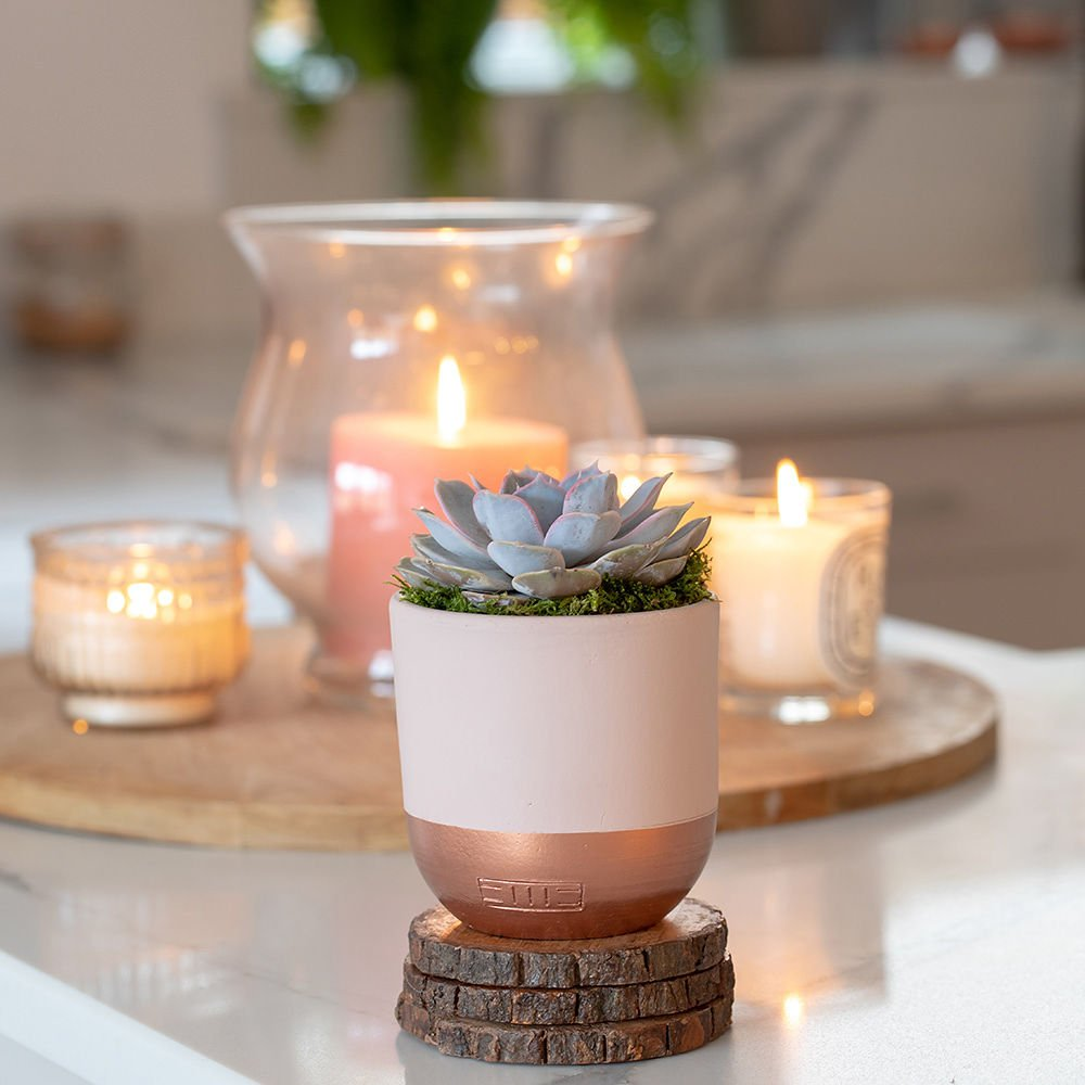 Lilacina succulent in copper dipped pot with soft candles in the background