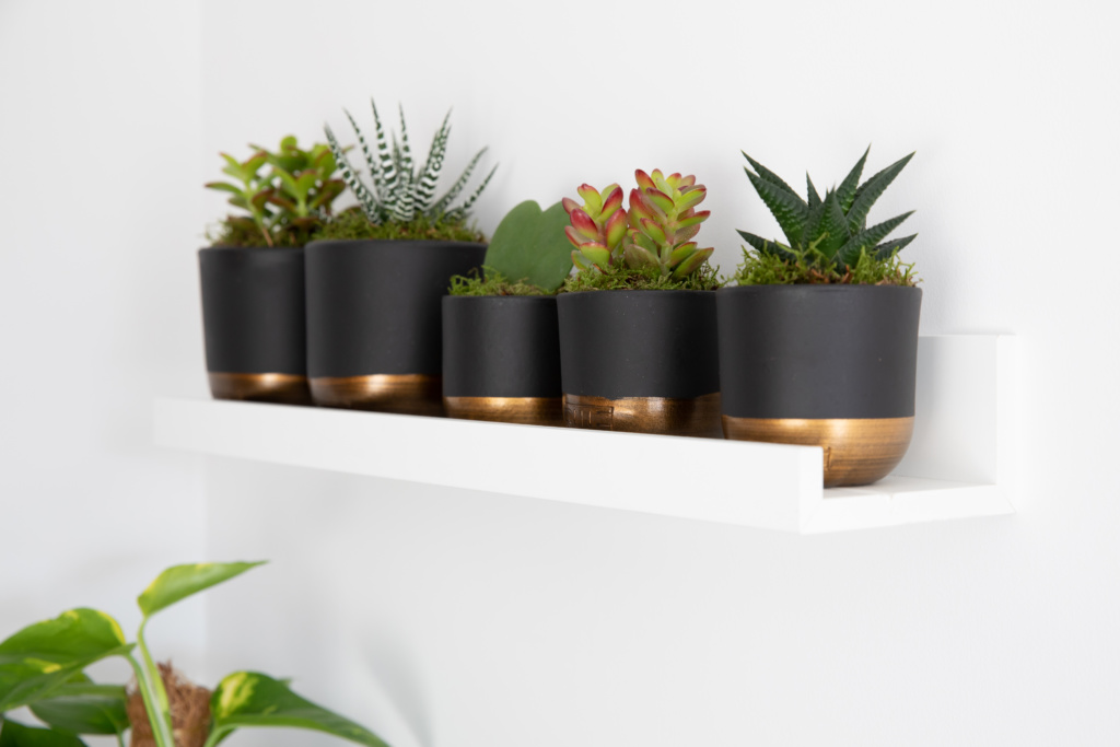 Five succulent plants in black and gold pots on a shelf