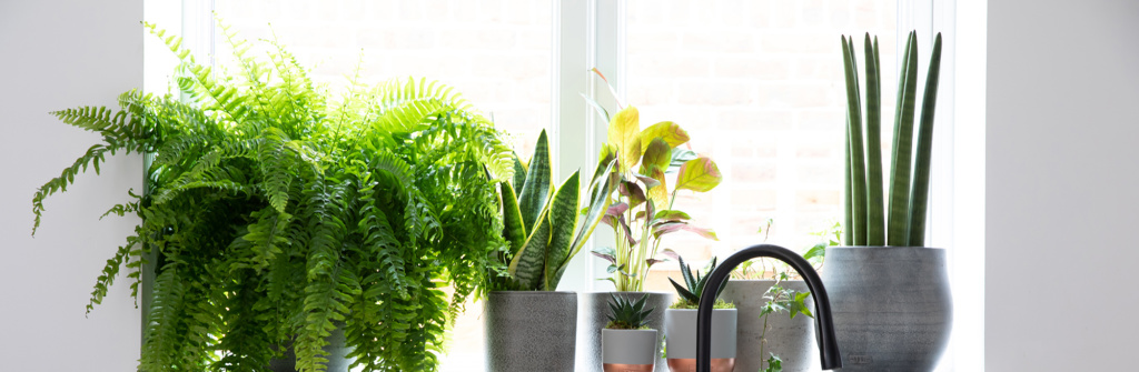 Plants on a shelf in front of a sunny window with a black tap