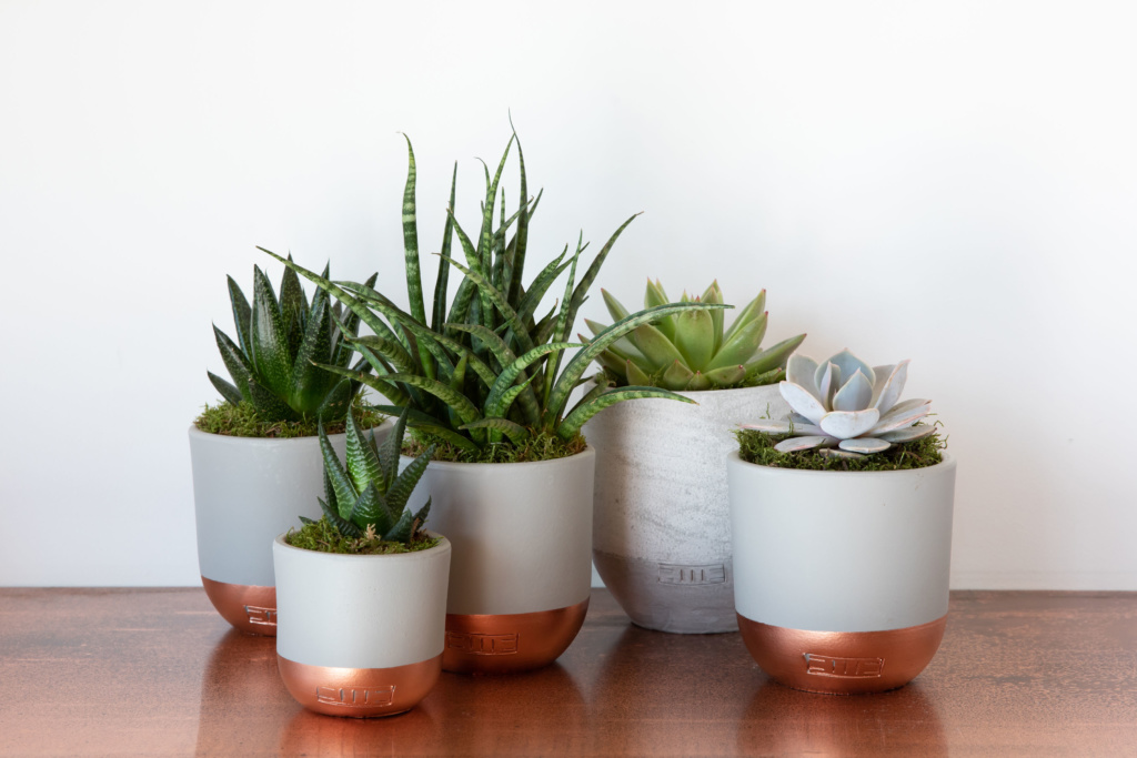 Group of succulents including mini Haworthia in copper and grey pot