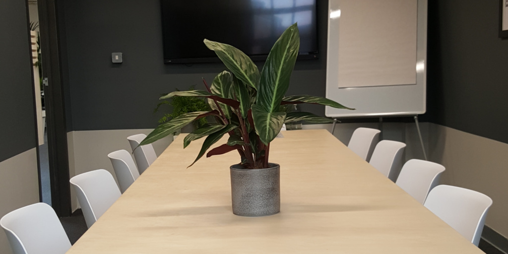 Rume2 boardroom with sansevieria