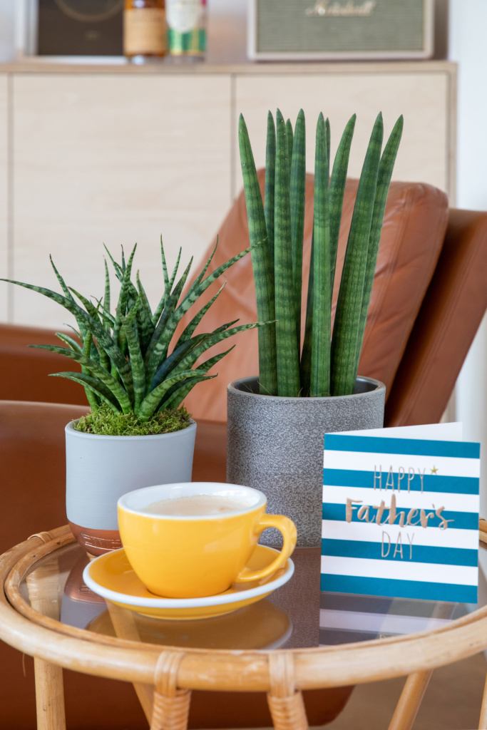 Side table with the following items on it: a happy father's day card, yellow coffee mug and saucer, sansevieria punk in a copper dipped pot and a medium sansevieria in a straight grey pot.
