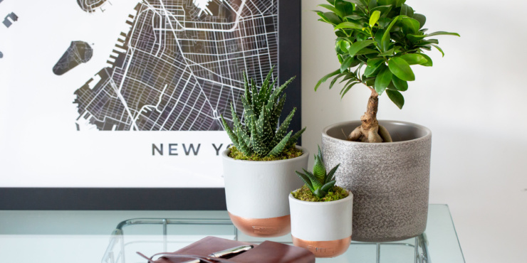 Glasstop table with a new york print on the wall. On the table are three plants: a succulent, sansevieria fernwood punk and ficus ginseng. A leather bound notebook is also on the table with a pen on top of it.