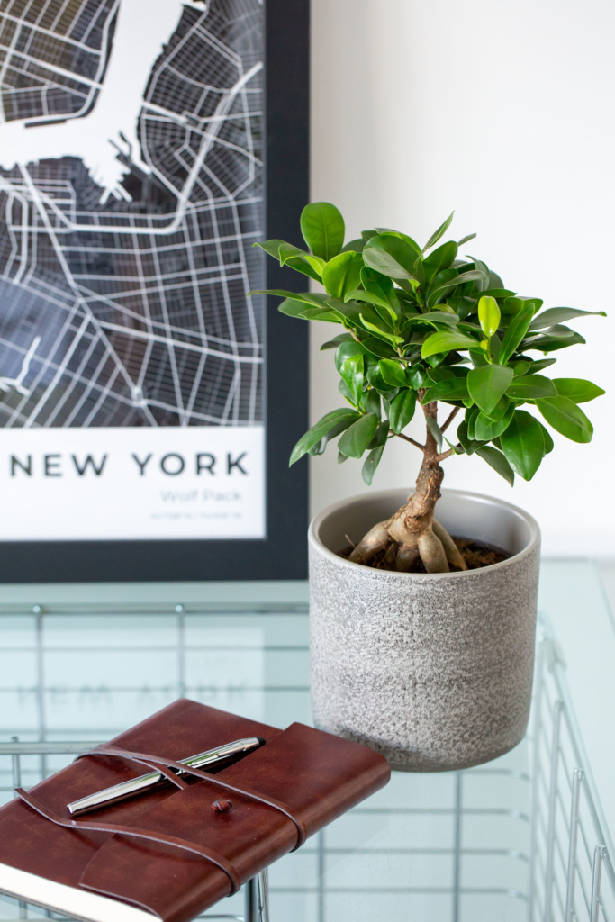 Ficus Ginseng in grey pot on glass table next to a leather bound notebook with a pen and a framed picture of New York in the background.