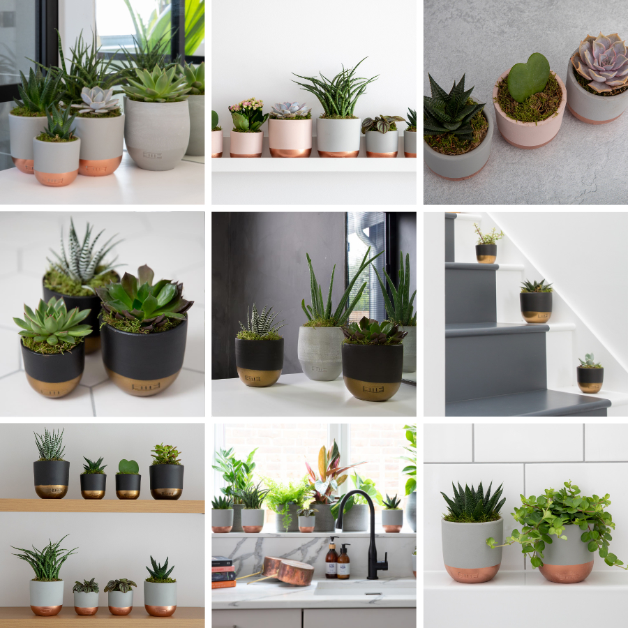A montage of nine different photos of succulents
