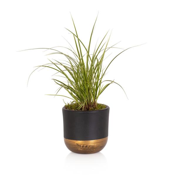 Mini Grass