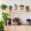 Various The Little Botanical plants