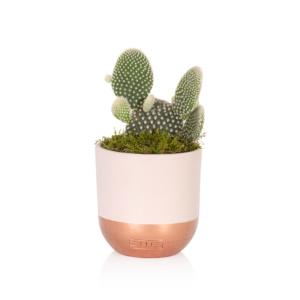 Medium Cactus (PINK)