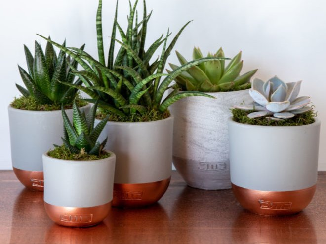 The Little Botanical plant pots