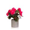 flowering bright pink begonia in grey pot