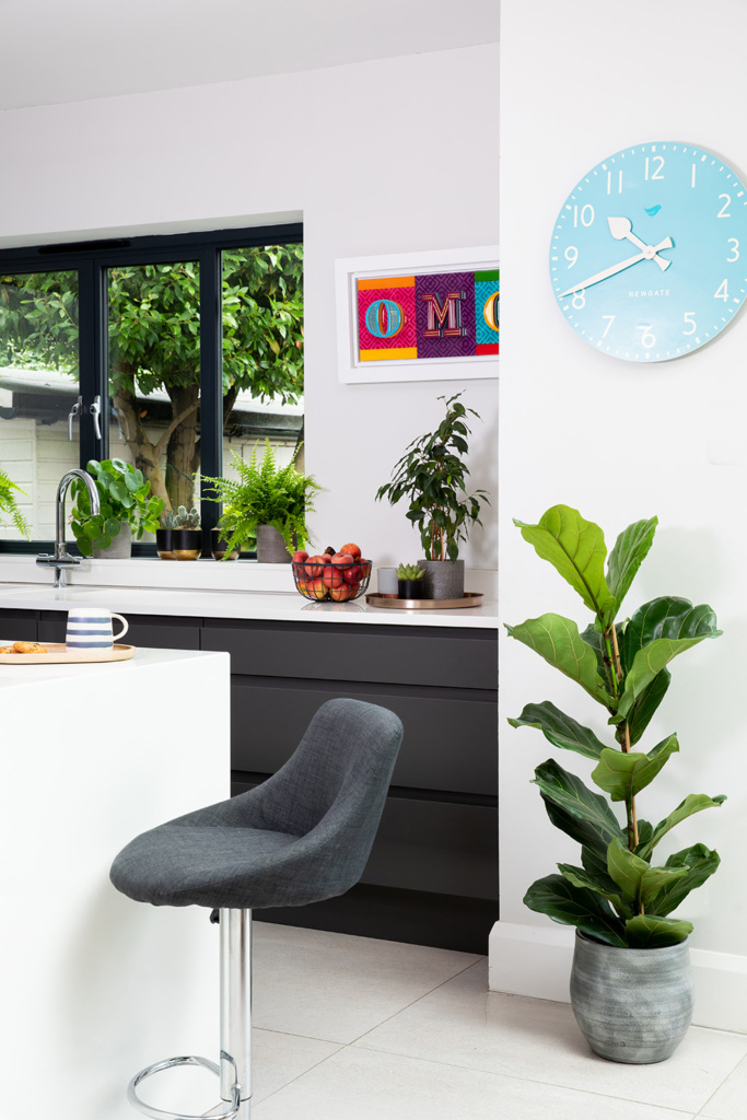 Large Fiddle Leaf Fig in Ceramic pot in kitchen