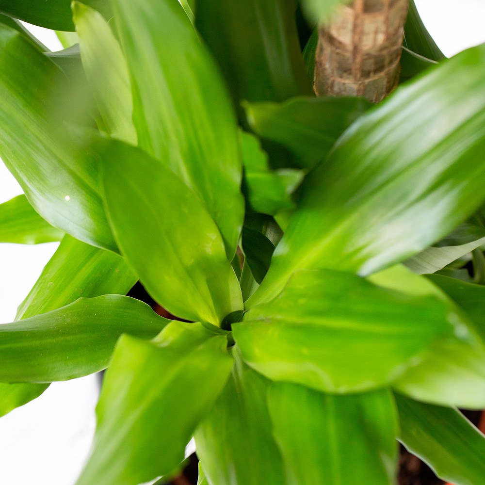 Close up of large house plant leaves