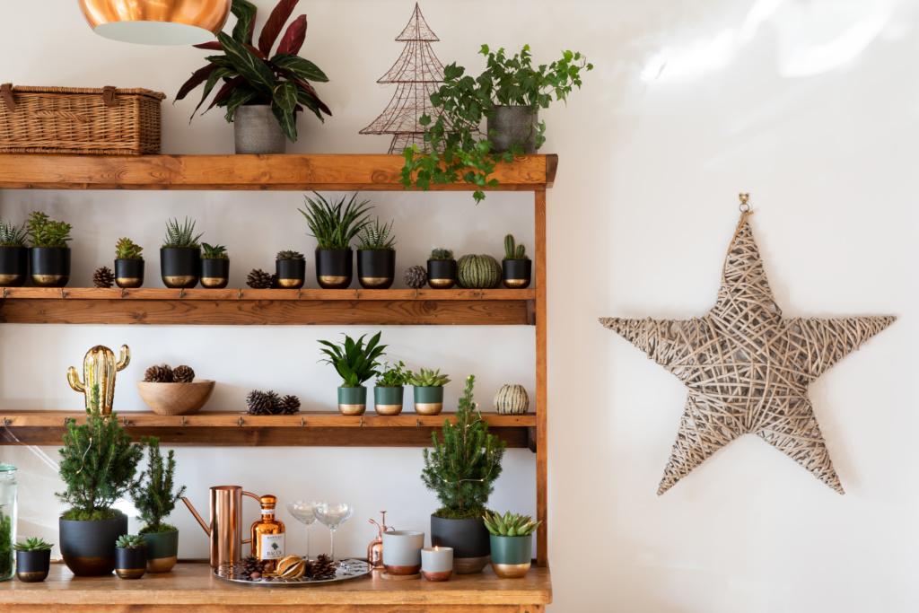 Shelves with lots of little plants on including Christmas trees, next to a wicker star on the wall.
