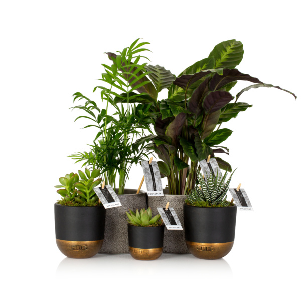 green home bundle of house plants