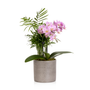 jungle orchid with greenery in grey ceramic pot