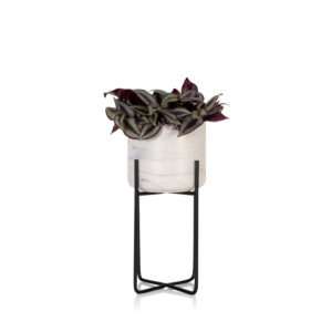 Tradescantia in marble planter with stand