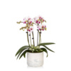 orchid in marble pot