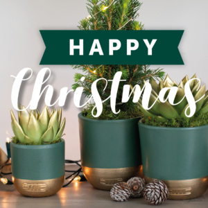 Christmas voucher with succulents in background