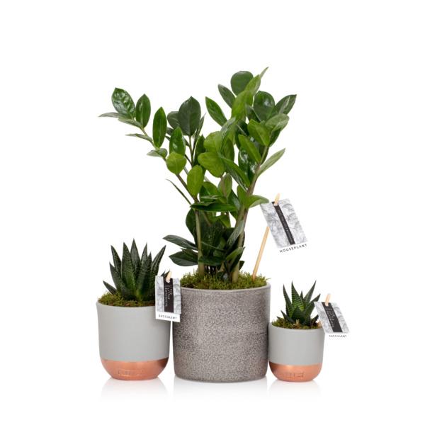 plant starter bundle