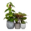 jungle plant gang