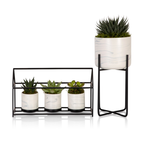 house trio of succulents in marble pots and large succulent in marble plant stand