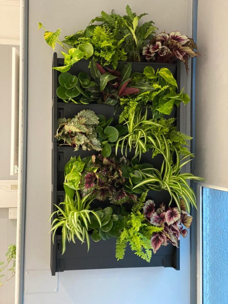Go Green Go Vertical Living Walls Indoor Outdoor Plant Walls