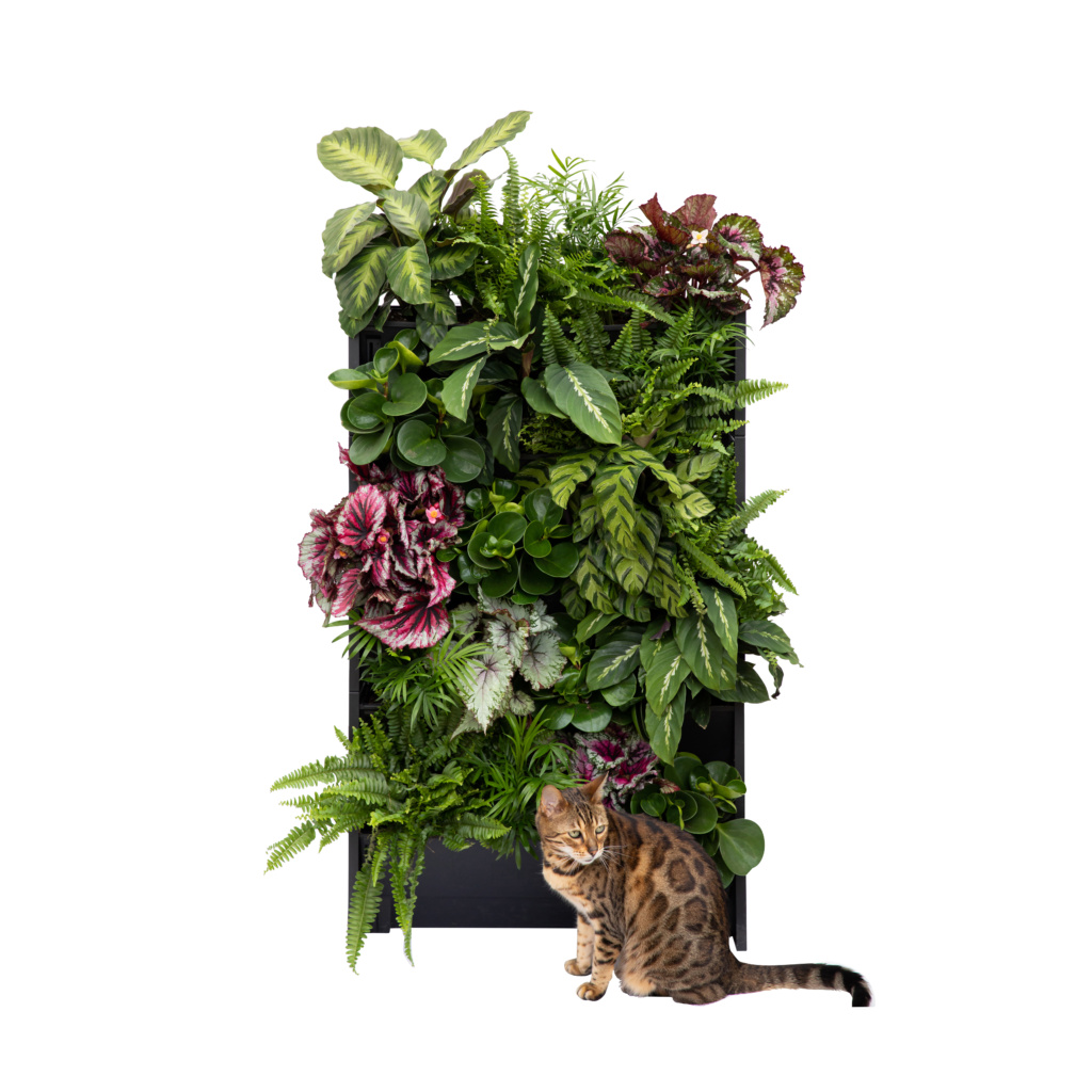 cat in front of a PlantBox living wall set of 5 troughs with houseplants