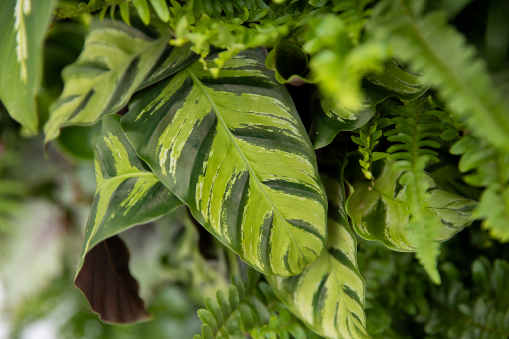 Close up of houseplant leaves on a living wall