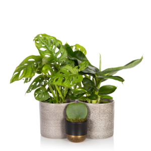 bundle of green houseplants
