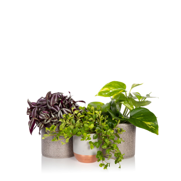 trailing plant bundle