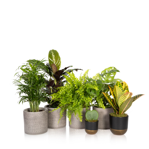 bundle of houseplants for your bathroom