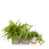 pet-friendly plant bundle
