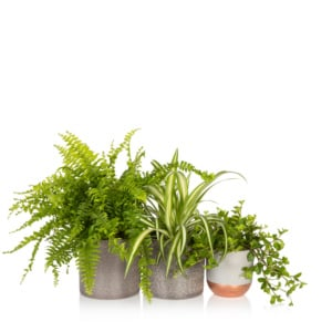 pet-friendly plant bundle