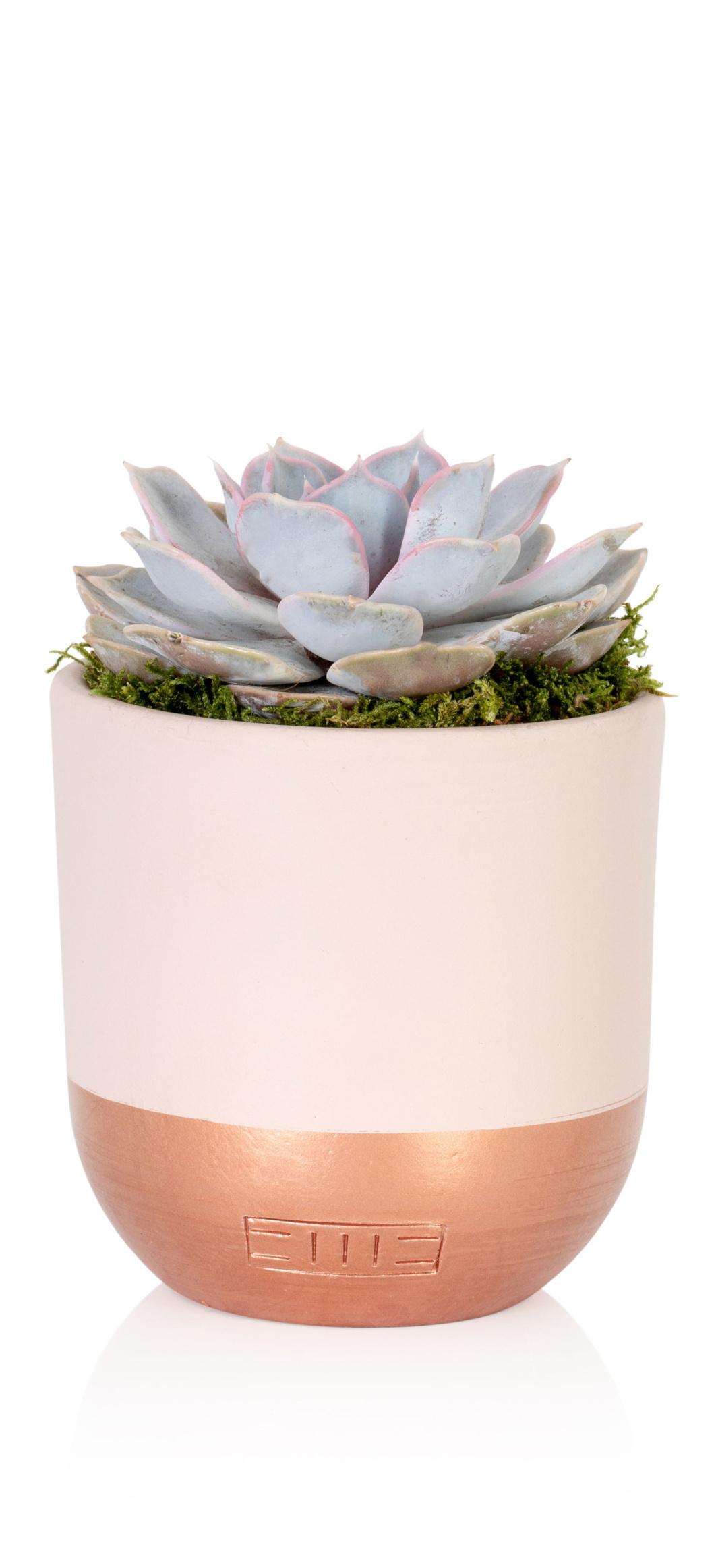 Little Botanical offers image