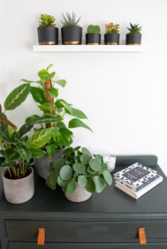 three houseplants on chest of drawers with five succulents on a shelf above