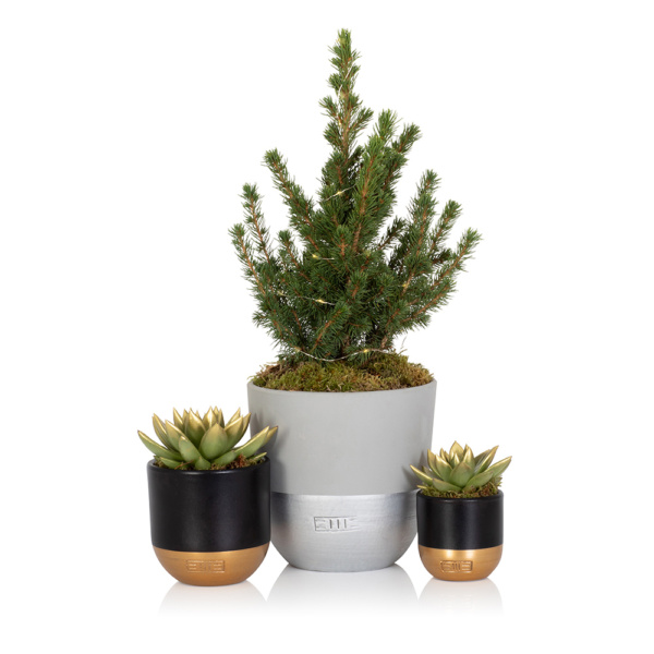 Potted medium Christmas Tree with two gold and black succulents with gold-dipped leaves