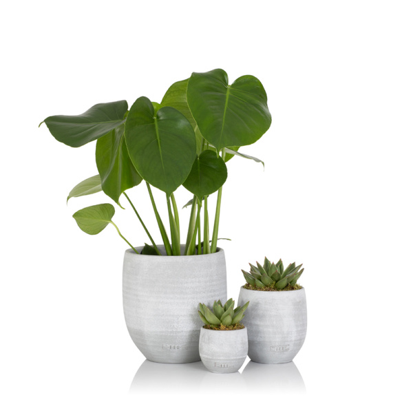 Monstera in grey ceramic pot next to two succulents in grey ceramic pots