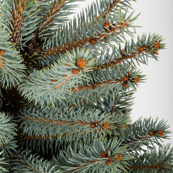 Close up of Baby Blue Christmas tree