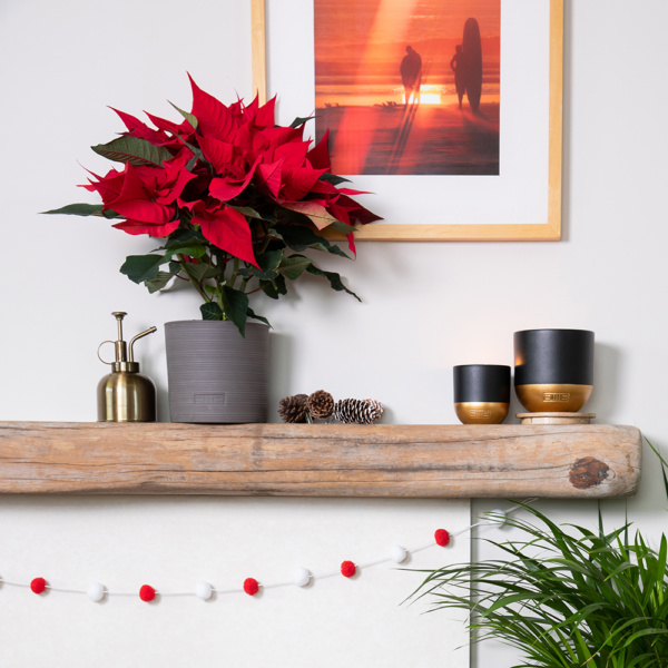 Red poinsettia in grey ceramic pot on fireplace next to other pots