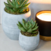 Close up of agave succulents in grey ceramic pots