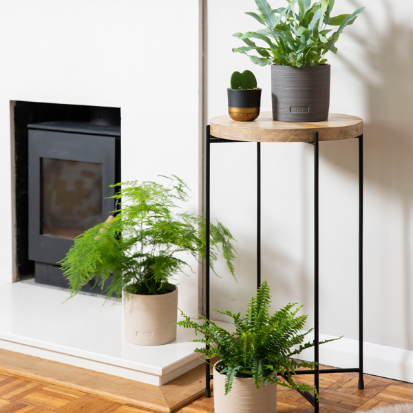 Three different types of fern plants in pots spread out on the floor and a side table