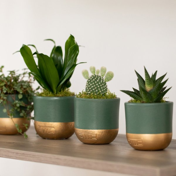 a row of four succulents on a shelf
