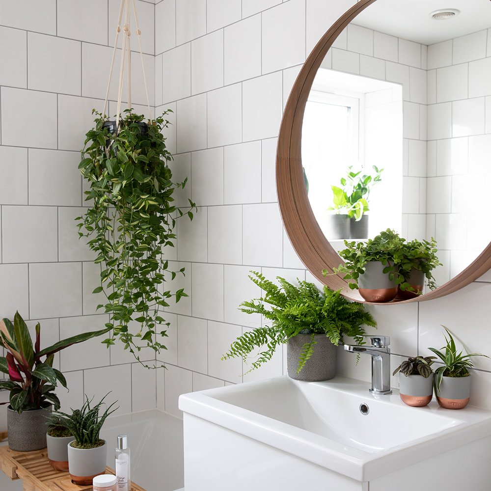 Houseplants That Will Thrive In Your Bathroom   Indoor Houseplants